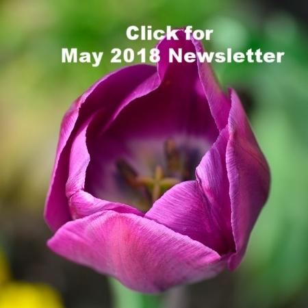 tulip-750460_640.jpg