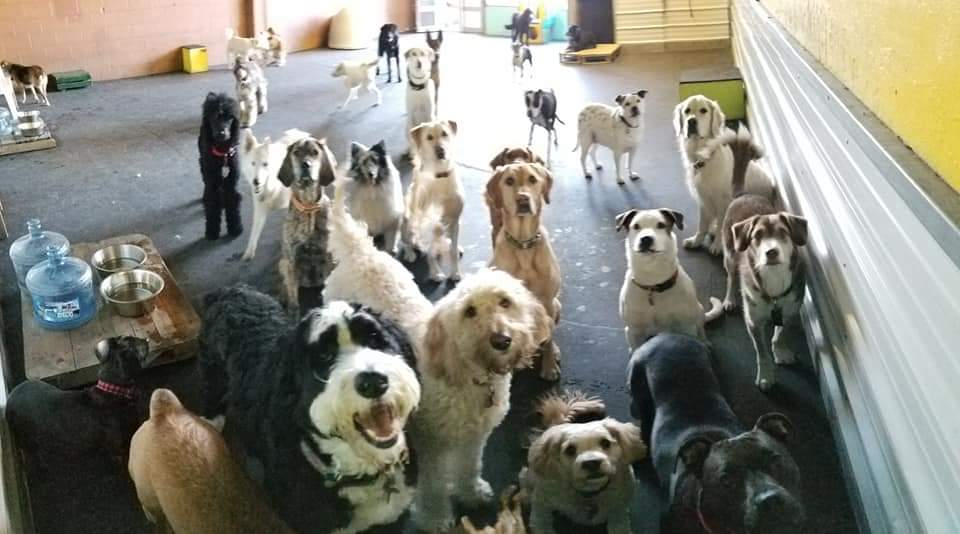 Doggie Daycare!