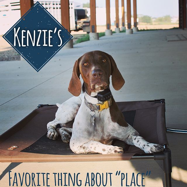 Kenzie is an off-leash champ when it comes to her recall! Thanks to her handy dandy remote collar she gets to enjoy more freedom during group classes. We hope to see Kenzie more in the future, the off-leash possibilities are great for her 😊! . . . . . . . . . . . . . . . . . . . #dogtrainer #obedience #germanshorthairedpointer #germanshorthair #germanshorthaired #germanshorthairedpointers #dogtraining #dogtrainers #dogtrainerslife #watford #northdakotalife