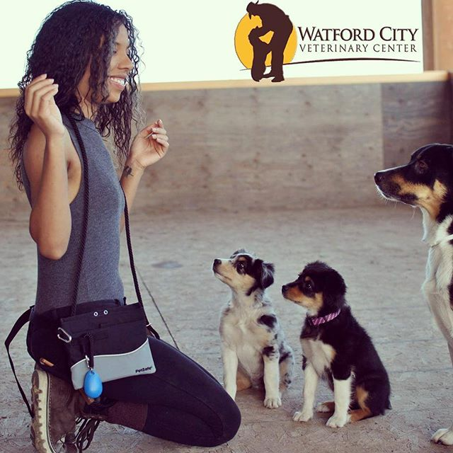 Really looking forward to some of the training options coming to Watford City Vet Center 😻 Board & Train and Train & Play are some of the newest options! Have your pup stay for the day or overnight for awesomely quick and efficient training.. saving you the trouble and leaving you with a fast responding and obedient doggie 😸 . . . . . . . . . . . . . . #northdakotagirl #doglove #northdakota #doglover🐶 #obediencetraining #obedience #aussiepuppy #aussiepuppies #aussiepup #dogtraining #dogtrainingadvice #dogtrainingtips #dogtrainingisfun