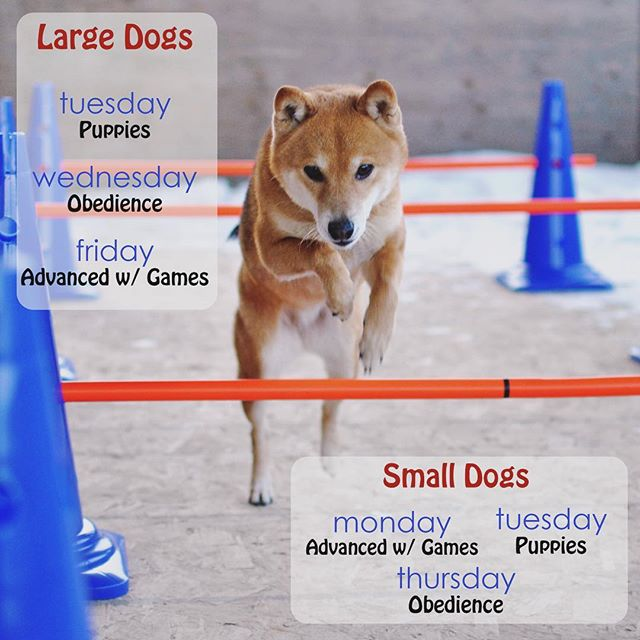 New group schedule for 2019! There's something for everyone 😸✨ ————————————— . . . . . . . . . . . . . . . . . . . . . #dogtraining #dogtrainingtips #agilitytraining #agility #agilitydog #agilitydogs #dogagility #shibadog #shibadogs #grouptraining #watfordcity #northdakotalife #northdakotagirl #capturenorthdakota #willistonnd #williston #sidneymontana #fargonorthdakota #minotnd #bismarcknd