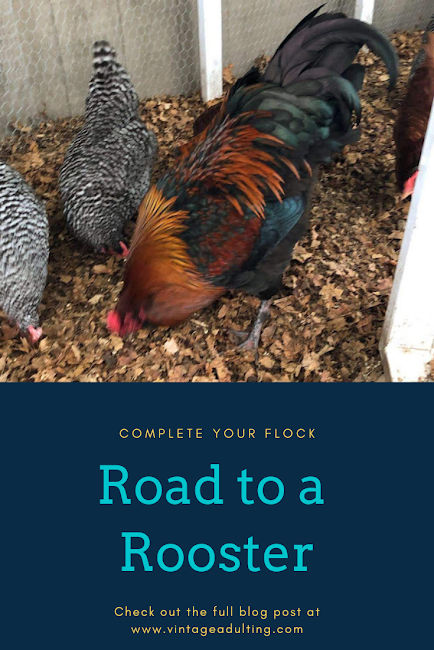 Road to A Rooster IMG.png