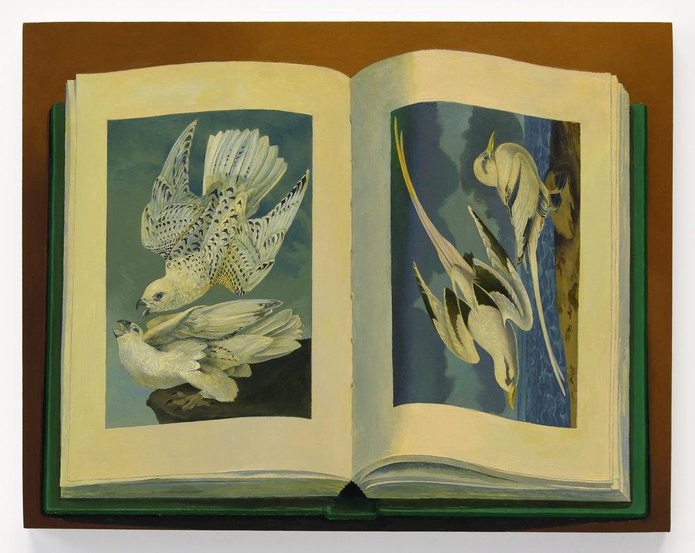 tropic bird and falcon.jpg