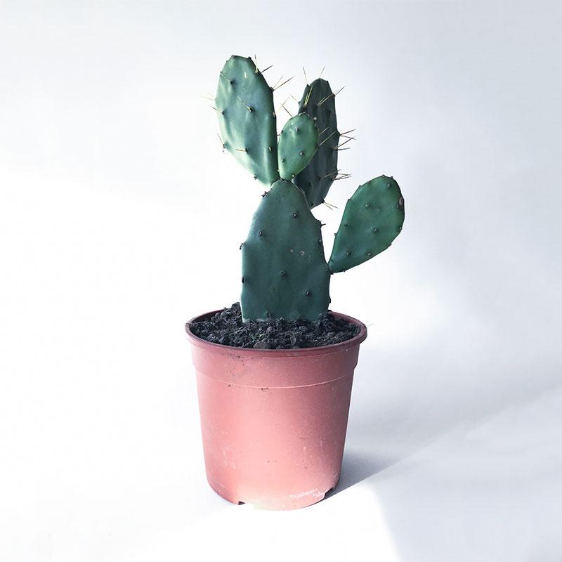 CactiPlant.jpg
