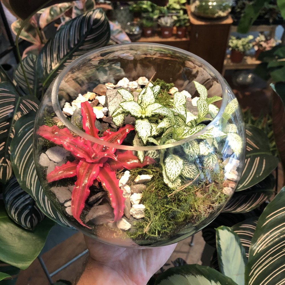 TERRARIUM PRE-ORDER CHRISTMAS '18. - Check a present off the list and reserve your terrarium now for collection closer to Christmas.