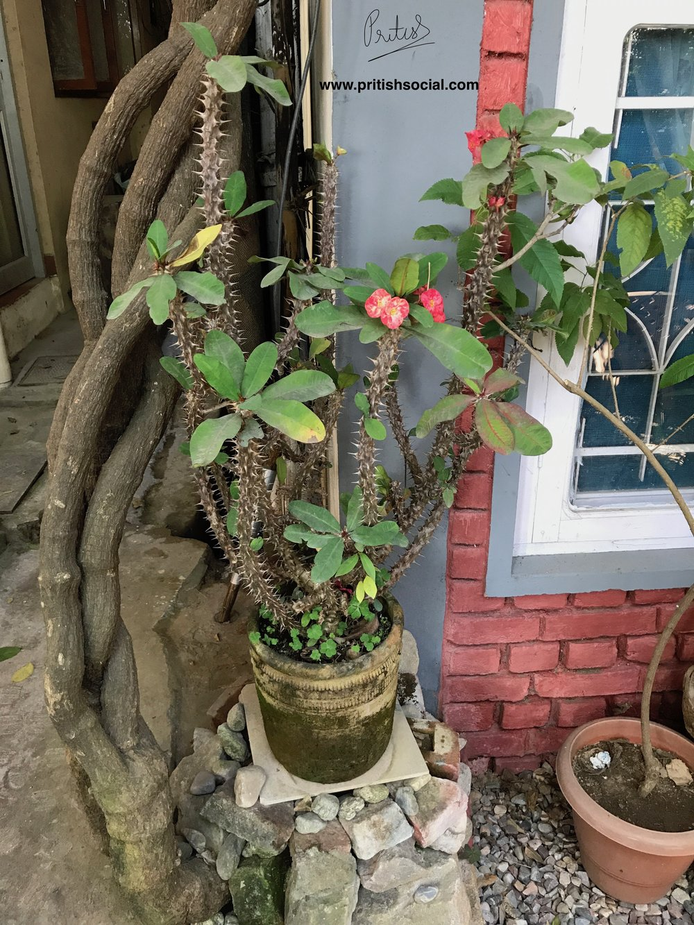 Garden Cafe Plant | Bir Billing Himachal Pradesh | Travel Photo Blogger | PritishSocial