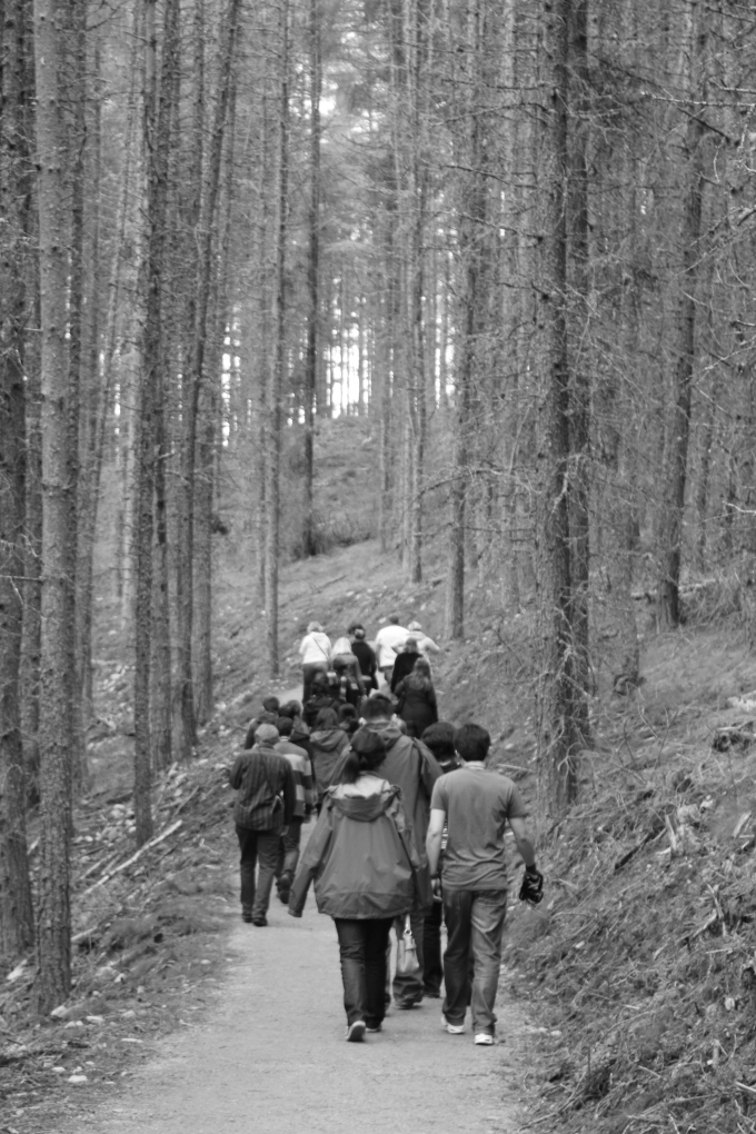 forest-walk-forth-bridges-scotland-travel photo- pritishsocial.jpg