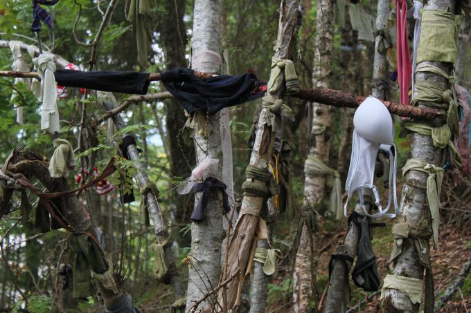 Travel Photo Scotland Tourism Tree Dresses PritishSocial.jpg