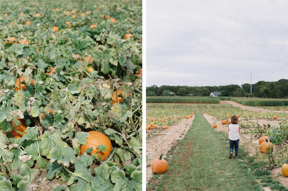cristina-lozito-photography-halloween-23.jpg