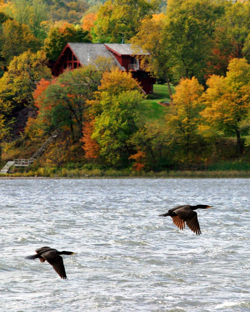 Fall-birds.jpg