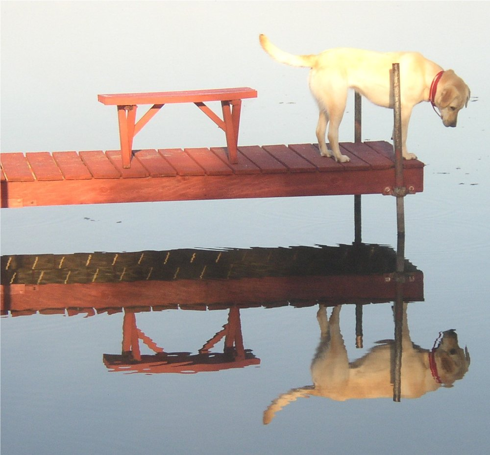Dog on Dock.jpg