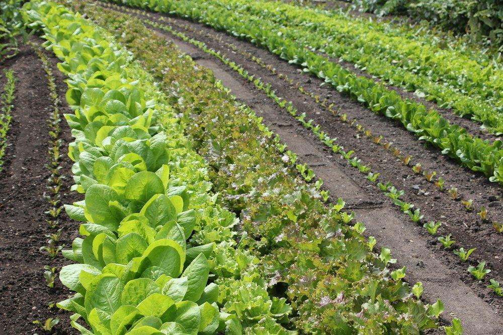 salad-500157_1920.jpg