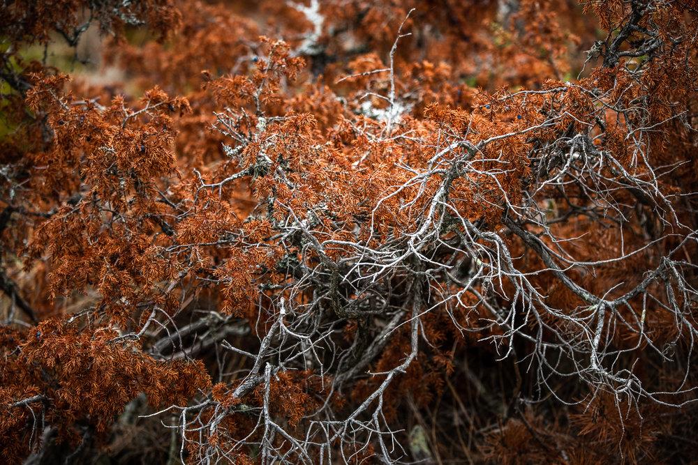 Sophie Dorn - Photography Journal - Åland Islands - Finland - Autumn Ruska Falun Red (3 of 34).jpg