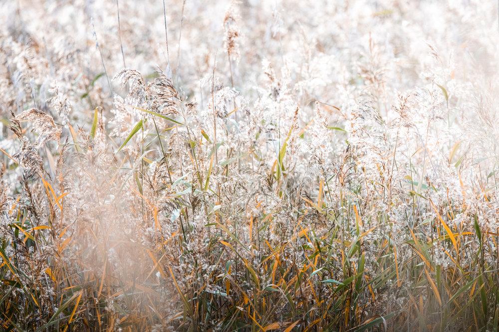 Sophie Dorn - Photography Journal - Åland Islands - Finland - Autumn Ruska Falun Red (25 of 34).jpg