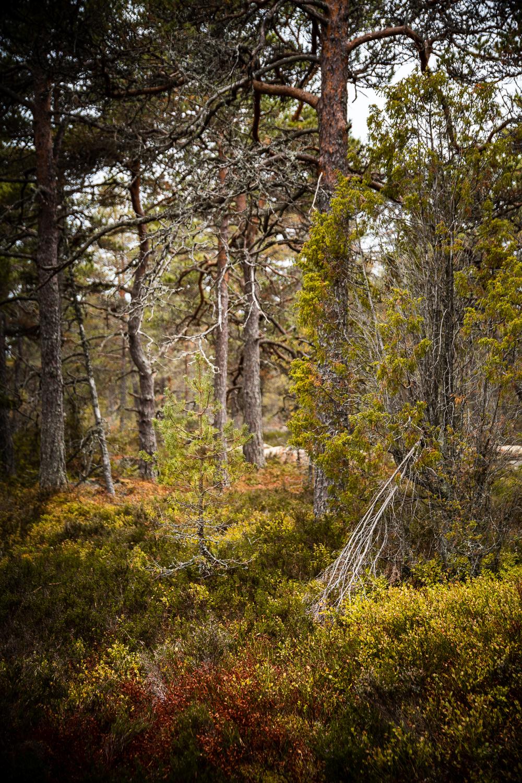 Sophie Dorn - Photography Journal - Åland Islands - Finland - Autumn Ruska Falun Red (13 of 34).jpg