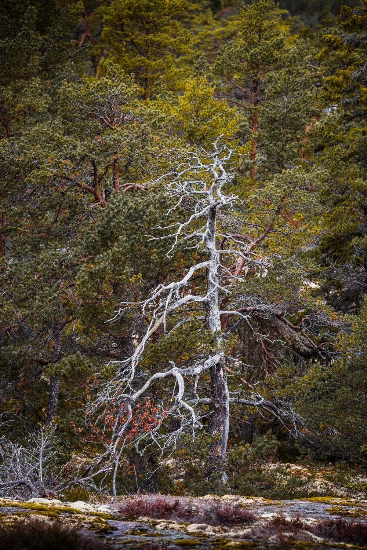 Sophie Dorn - Photography Journal - Åland Islands - Finland - Autumn Ruska Falun Red (15 of 34).jpg