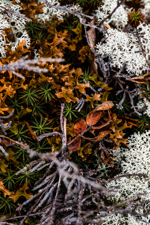 Sophie Dorn - Photography Journal - Åland Islands - Finland - Autumn Ruska Falun Red (7 of 34).jpg