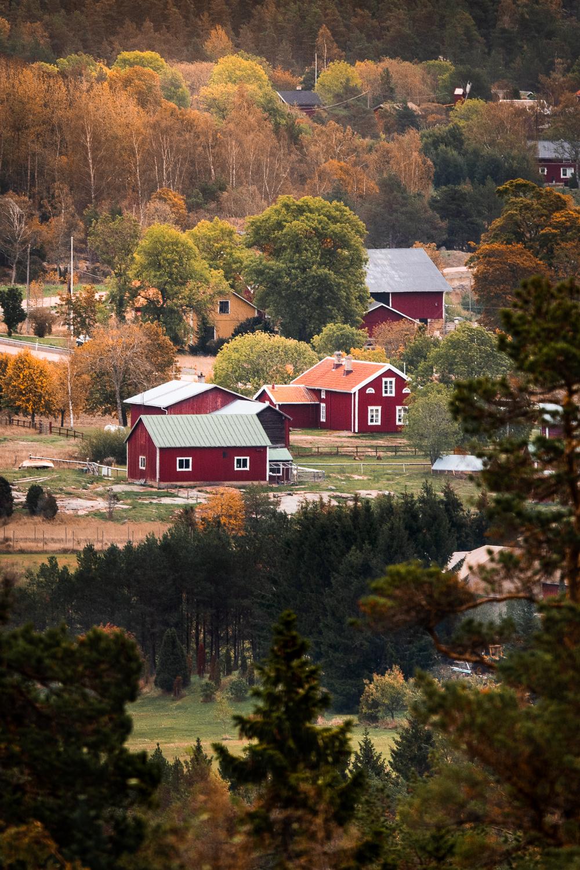 Sophie Dorn - Photography Journal - Åland Islands - Finland - Autumn Ruska Falun Red (9 of 34).jpg