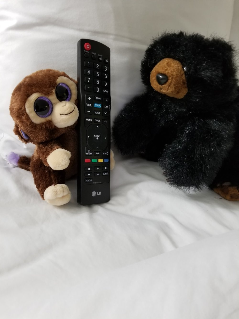 Hannah the Monkey stole the remote from Sammy!