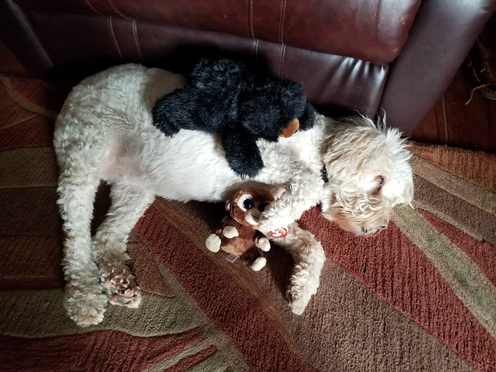 Sammy and Hannah piled up on their beloved furry friend Maggie to snuggle as soon as they got home.