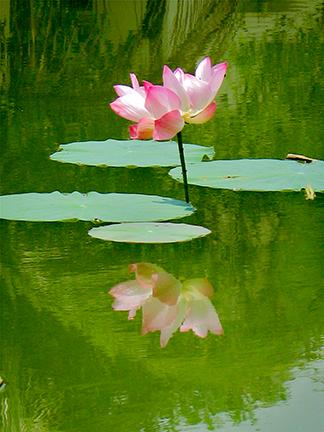 Lotus04.png