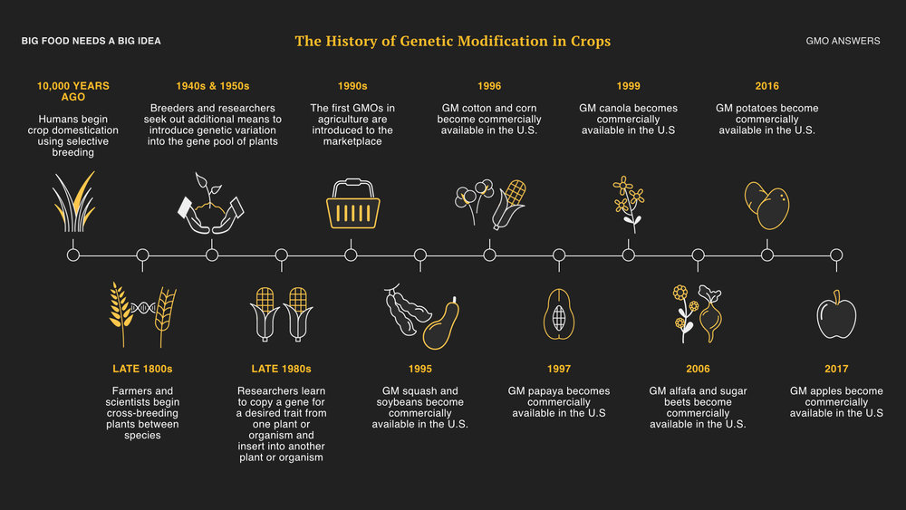 Since domestic agriculture began, 10,000 years ago, farmers have been intentionally changing the genetic makeup of all crops they grow. Every fruit, vegetable and grain that we know today has been genetically altered in some form or another.