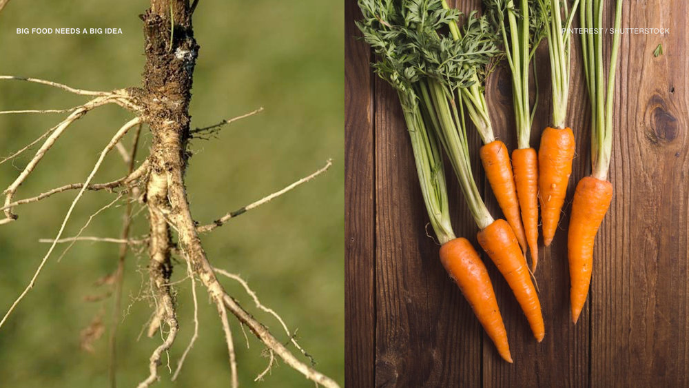 Can you identify what this is?  Farmers domesticated these thin roots into....carrots