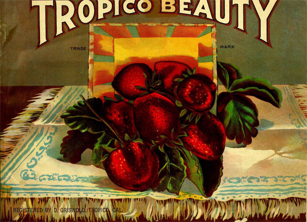 "4. Tropico was famous for its strawberries, called ""Tropico Beauties"""
