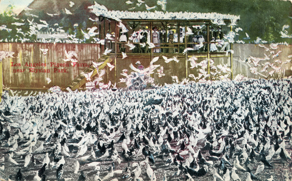 15. The Pigeon Farm was a tourist attraction, 1911