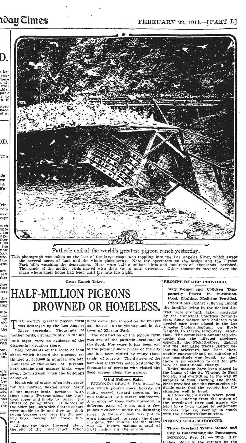 17. Newspaper coverage of the Pigeon Farm's demise, 1914