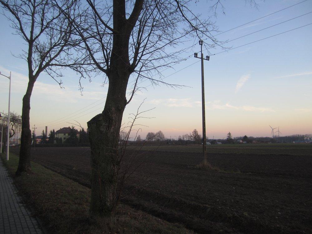 Zuromin windmills.jpg