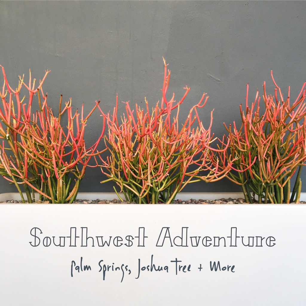Southwest Adventure | Palm Springs, Joshua Tree + More