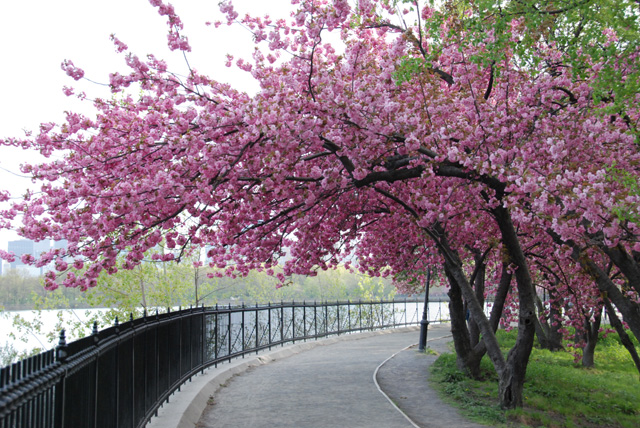 spring in new york