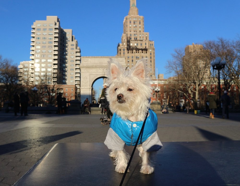 washington square park dog influencer.jpg