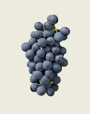 Syrah for fruit, spice and smoke