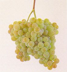 Albariño grapes and Rias Baixas are inseparable