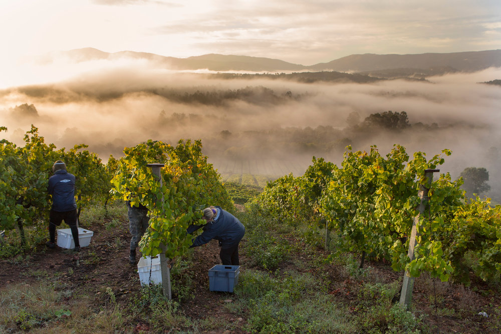 Rias Baixas with its verdant, magical and rugged.coast. Home to the best white wine and seafood combination you might ever find.