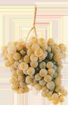 Alvarinho grapes (Spain's Albariño)