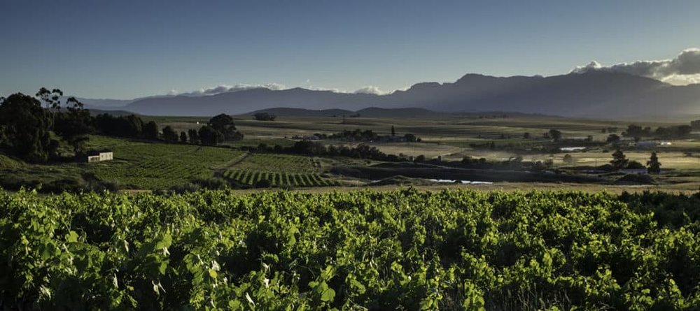 The Swartland's wine revolution is occurring beneath a huge, vaulted sky.