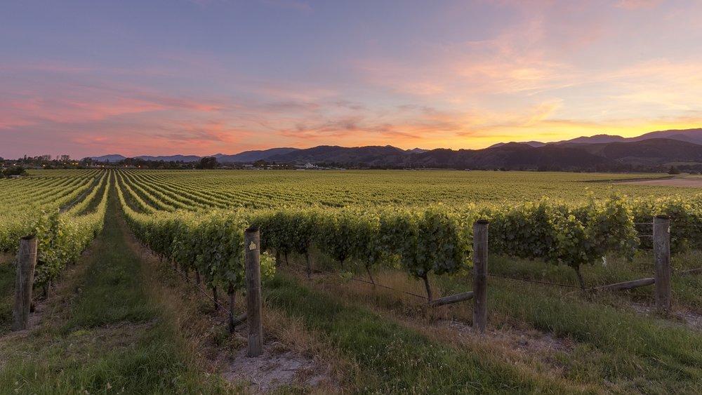 Seifried Family Winemakers vineyards