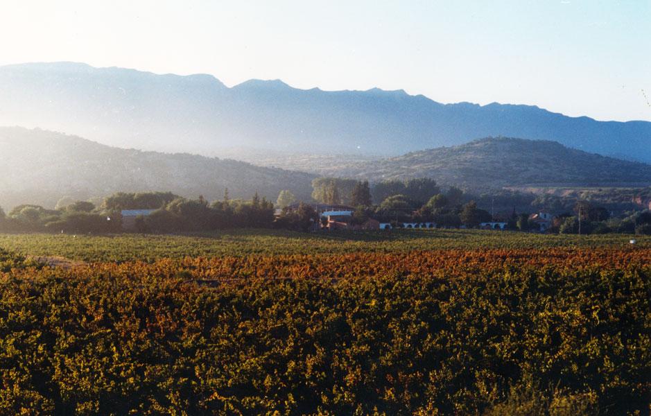 Bodegas Kohlberg is Bolivia's most internationally recognized and largest wine producer.