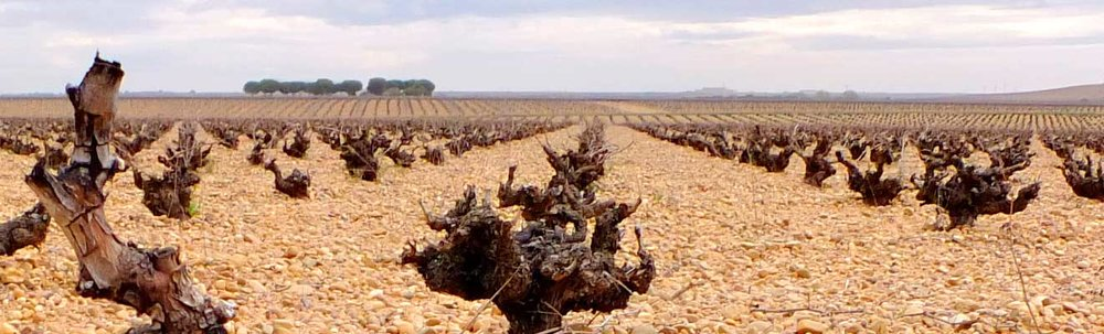 Verdejo has made its home on Rueda's high plains