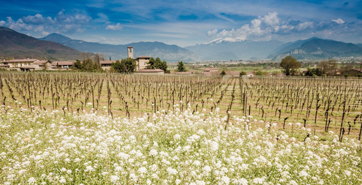 Mountains, lake and valley bowl combine to create Franciacorta's own special climate
