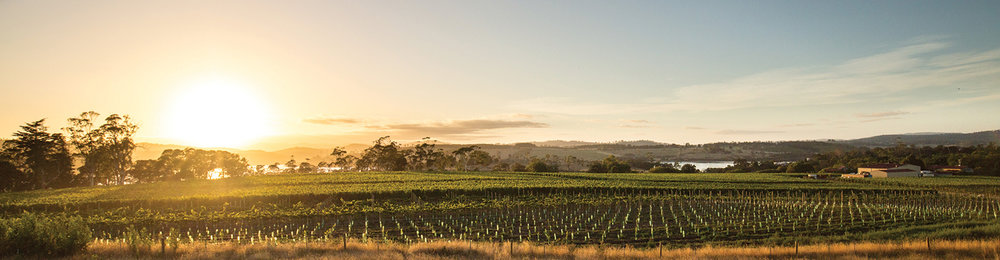 Along the Tamar Valley Wine Route