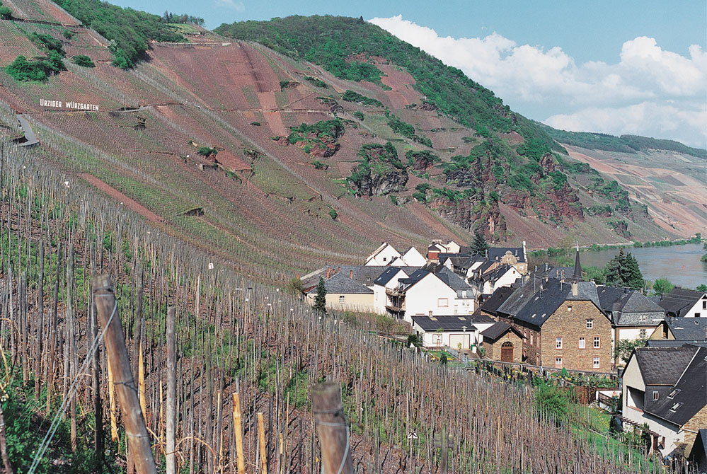 Pictures cannot convey the steepness of vineyards such as these at  Dr. Loosen  in Bernkastel