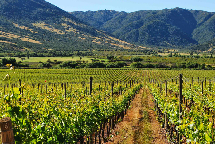 Rugged mountains and fertile valleys characterize the agricultural land in Mexico's California
