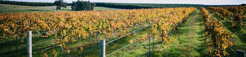 Plantagenet Wines vineyard in the Mount Barker sub-region of the Great Southern