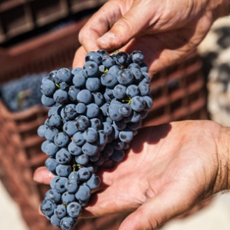 Agiorgitiko grapes and wines are steeped in legend