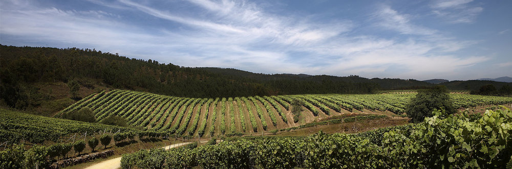 Vineyards along the wine route in the high plateaus of Campo de Borja