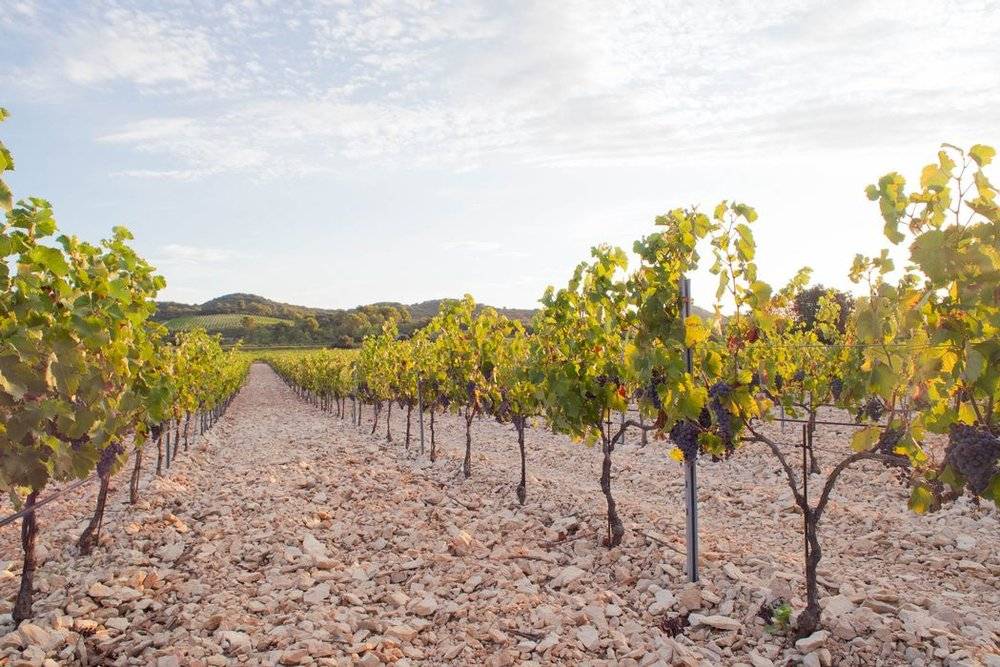 These striking limestones at Domaine Lafond are one of three of the main soil types of Tavel